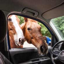 IMG_9027 storytelling dokumentaista török györgy portré lovas fotózás portrait photography branded content free horse style documentary fotós amarok volkswagen