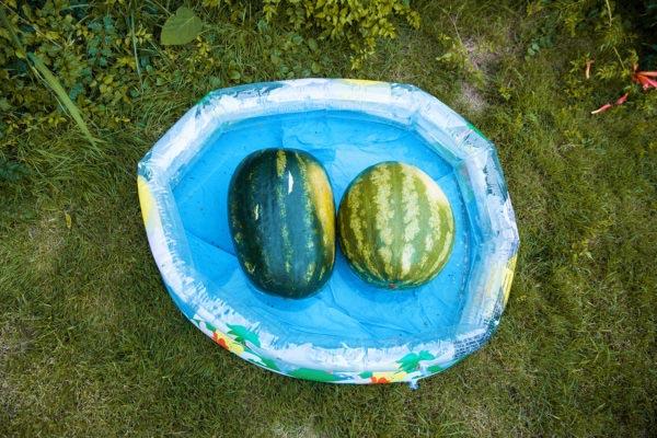 Storytelling documentary family photographer European nyár summer dokumentarista történetmesélő fotózás boncsér orsolya dinnye watermelon